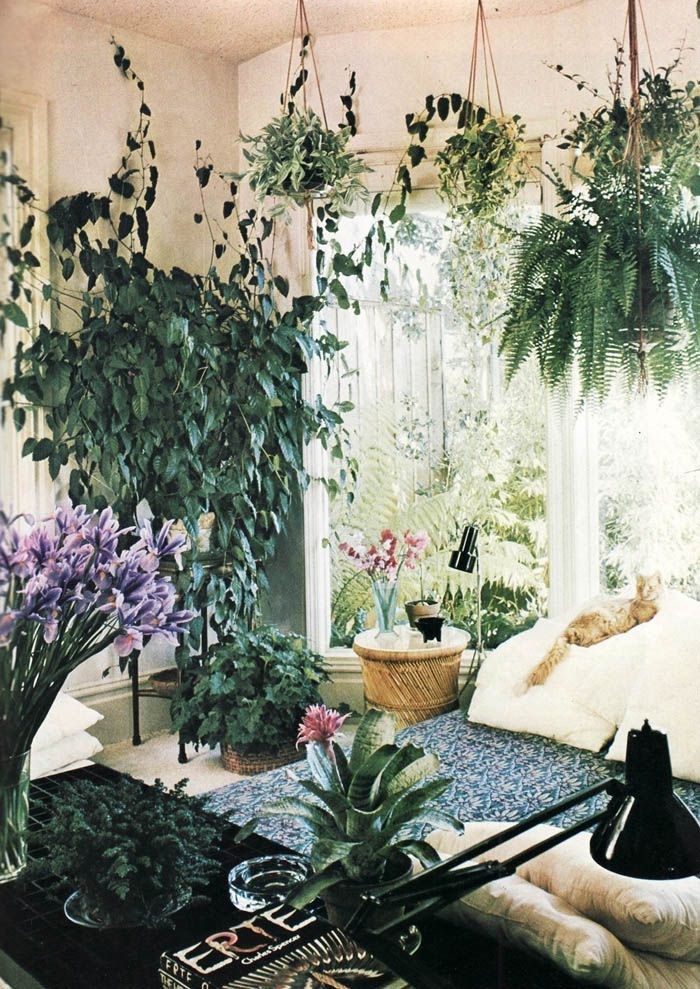 Hanging Plants Living Room