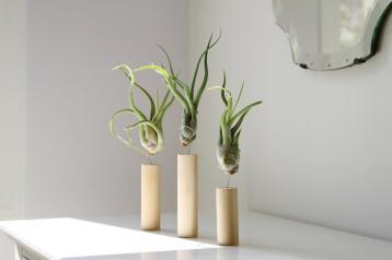 Air Plant Display Ideas Care Tips Small Garden