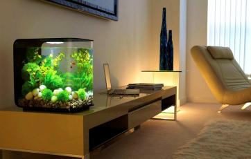 Amazing Contemporary Fish Tanks Additional