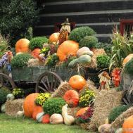Autumn Display Scarecrow Pumpkins