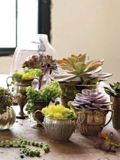 Beautiful Vintage Teacup Mini Succulent Garden