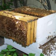 Beekeeper Box