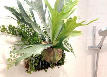 Best Indoor Plants Picks Every Room Bob Vila