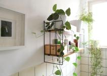 Best Plants Suit Your Bathroom Fresh Decor Ideas
