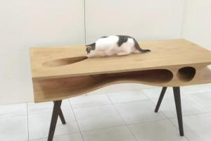 Cat Coffee Table Home Design