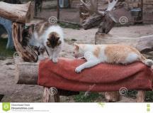 Cats Royalty Stock Cartoondealer