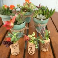 Cork Succulent Party Favors Wine Garden