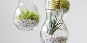 Craft Projects Diy Light Bulb Terrariums Snug