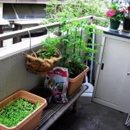 Creative Small Balcony Garden Ideas