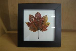 Diy Frame Autumn Leaves Cash4books Blog