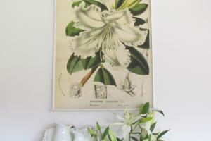 Diy Hanging Botanical Prints Kingsbury Brook Farm