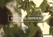 Diy Hanging String Garden Green Renaissance