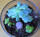 Diy Make Terrarium Garden Succulent Plants