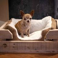 Diy Pallet Dog Bed Ideas Don Know Which Love More