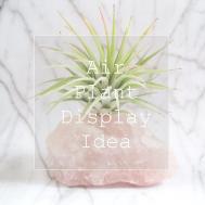 Diy Plants Rock Air Plant Display Idea Adorablest