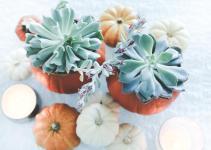 Diy Pumpkin Succulent Centerpieces Life Style