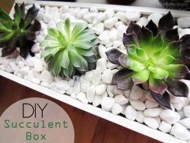 Diy Succulent Box Homey