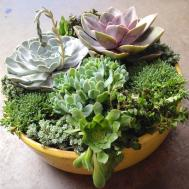 Diy Succulent Container Designs Tips Create Your Own