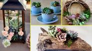 Diy Succulent Plant Terrarium Ideas Home Decor