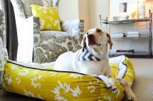 Easy Affordable Diy Dog Bed Ideas Homestylediary