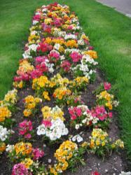 Flower Bed Designs Beds