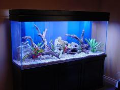 Freshwater Aquarium Cares