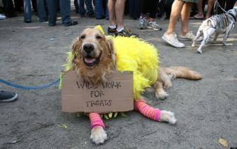 Funniest Pet Halloween Costumes Submit Your Own