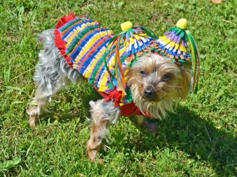 Funny Diy Halloween Costumes Dogs