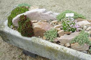 Gardenless Gardener Rock Garden Ideas