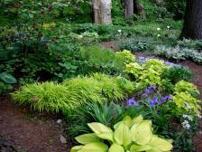 Ggw Carolyn Shade Gardens