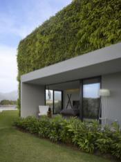 Greenery House Puerto Vallarta Decorative Woodbine