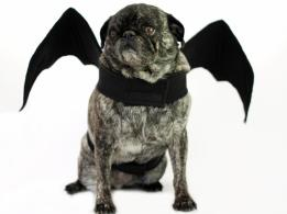 Halloween Costume Ideas Dogs Cats Entertaining