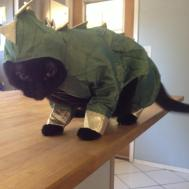 Halloween Inspiration Costume Ideas Sister Cat