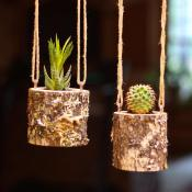 Hanging Planter Indoors Rustic Succulent Log