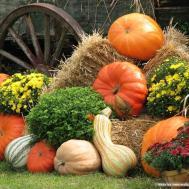 Harvest Scene Pumpkins Pumpkin Arrangement