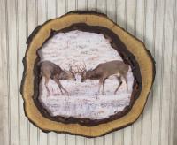 Hollow Log Frame Walnut Tree Slice