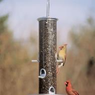 Homemade Bird Feeders Creative Hints Attractive Design