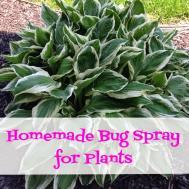 Homemade Bug Spray Plants Coupon Crazy Girl
