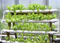 Hydroponic Systems Greenhouse Garden