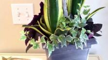 Incredible Indoor Plant Container Ideas Sustainable Pals