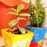 Indoor Succulent Garden Design Lovin