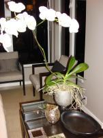 Jandjhome Diy Mercury Glass Vase
