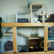 Level Condo Dog Crate Binkybunny House