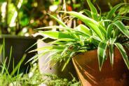 Low Maintenance Indoor Plants Your Office Eco