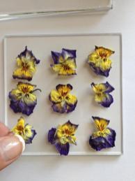 Make Pressed Flower Coasters