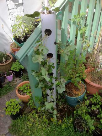 Make Vertical Strawberry Tube Planter Urban