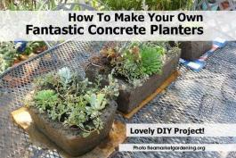Make Your Own Fantastic Concrete Planters