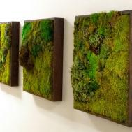 Moss Walls Newest Trend Biophilic Interiors