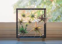 New Ways House Air Plants Cool Hunting