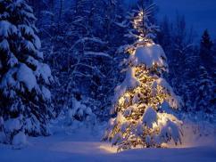 Patty Here Beautiful Christmas Holiday Season